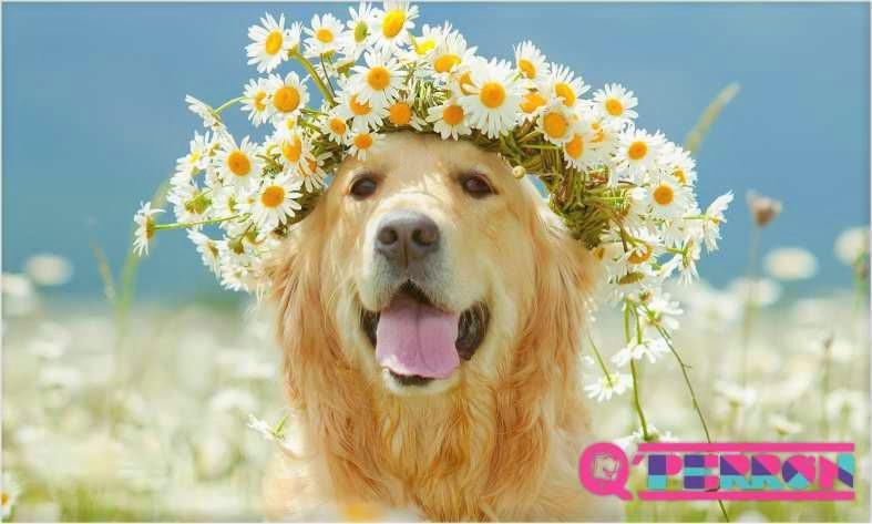 nombres-para-perros-de-flores