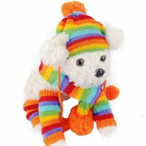 gorro-bufanda-calcetine-para-perro