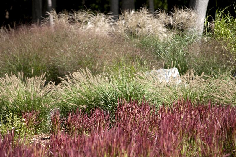 Egremont – mixed ornamental grass bed