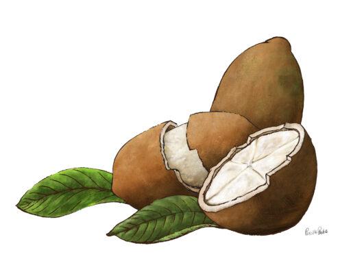 Capaucu Fruit Illustration