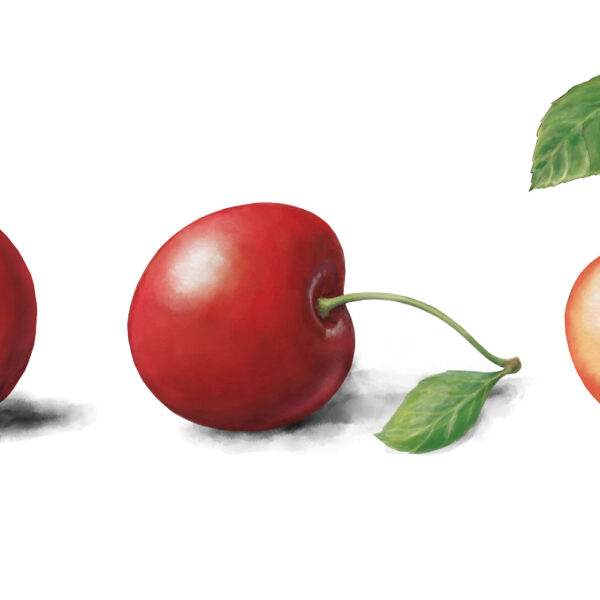 3 cherries illustration