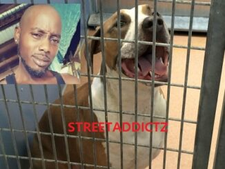 Father killed by 6 Pitbull dogs, was bit more than 100 times.