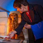 American Airlines kicked black man off plane so dog could fly first class.