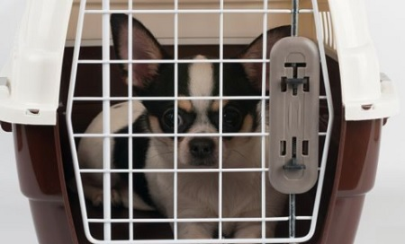 Man arrested for picking up a Chihuahua in a cage and throwing it at a family member during a fight