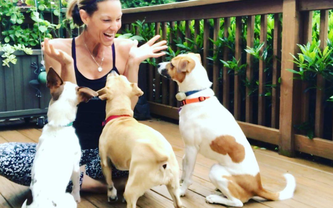 Karma Yoga & Rescue Doggies