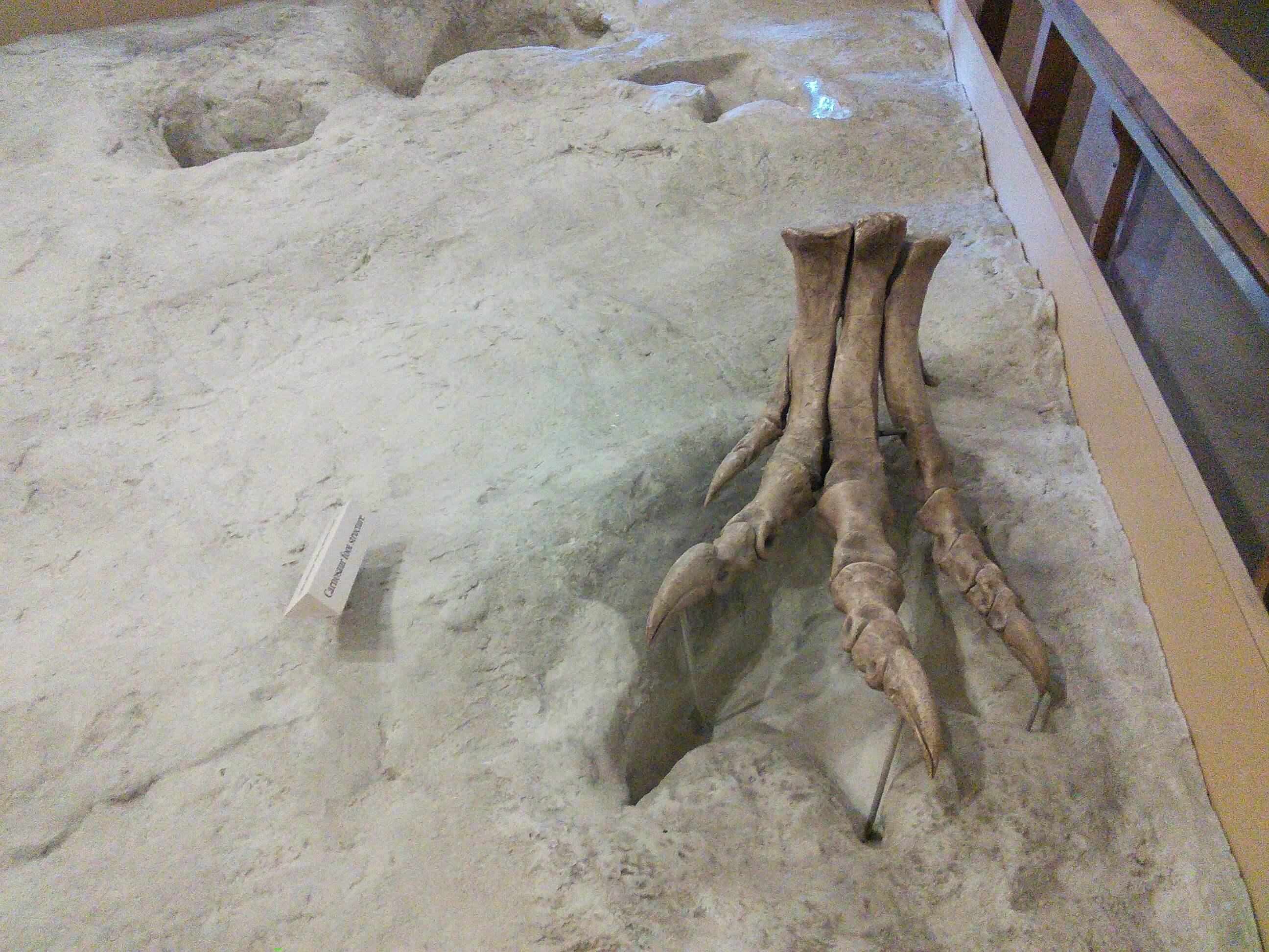 Theropod Dinosaur Foot, Dinosaur Valley State Park, TX