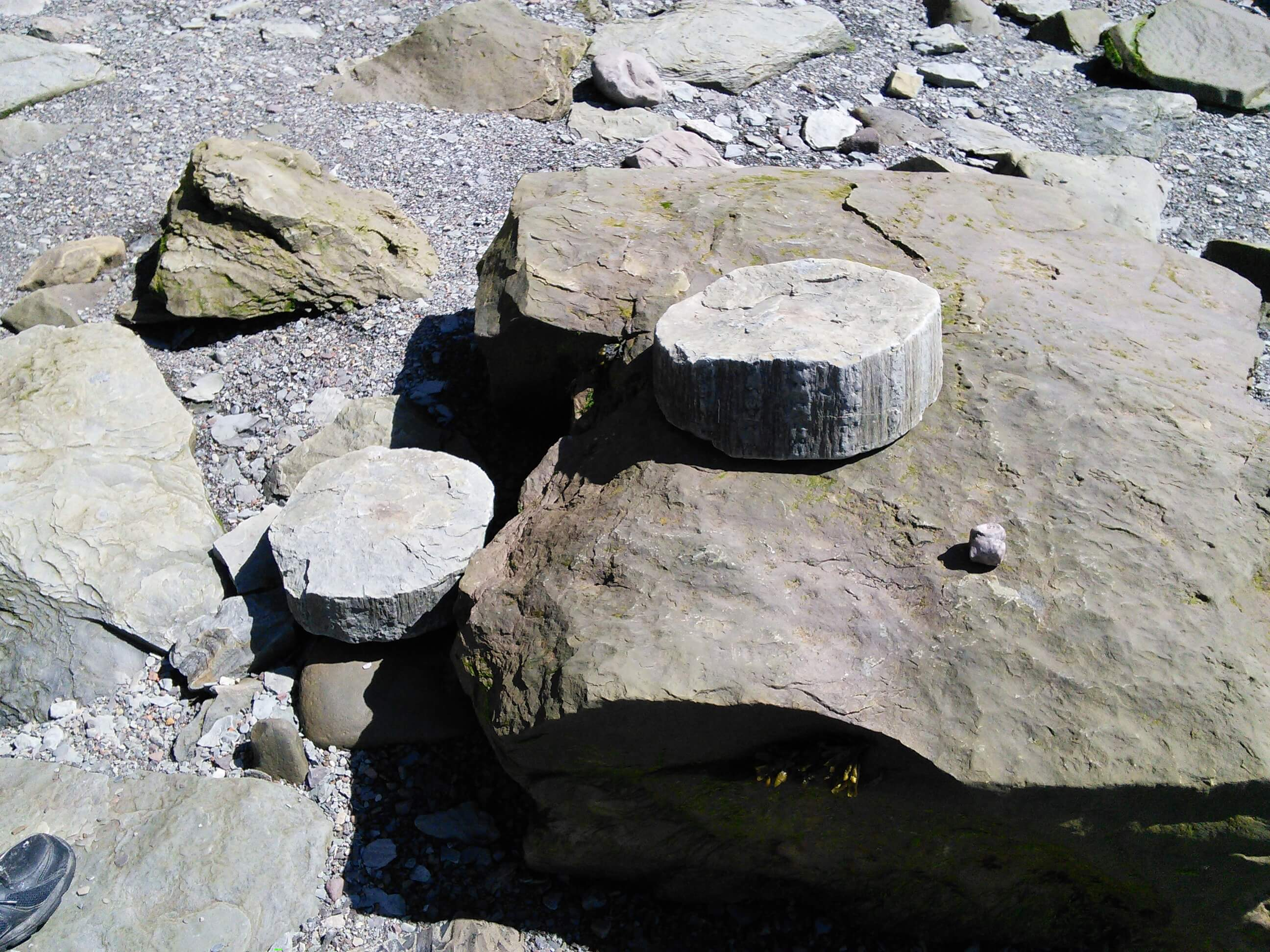 Sections of fossil tree trunk, Joggins Fossil Cliff, NS