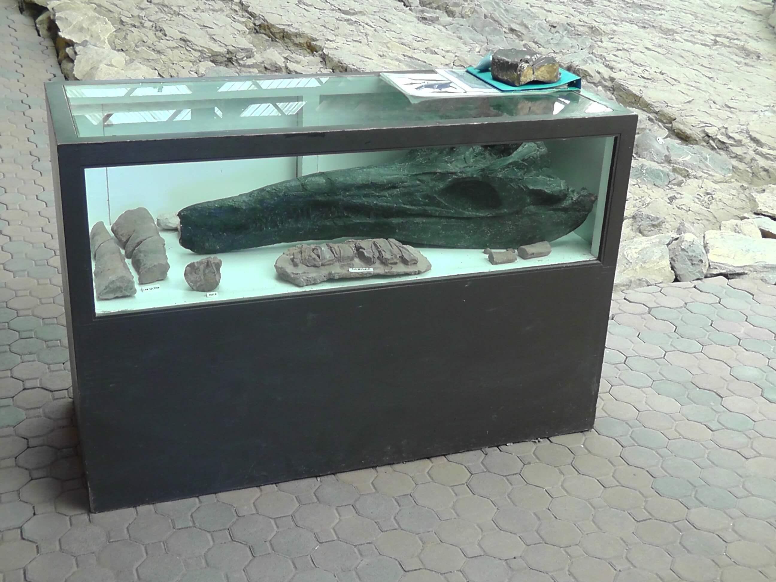 Ichthyosaur skull, Berlin/Ichthyosaur State Park, Nevada