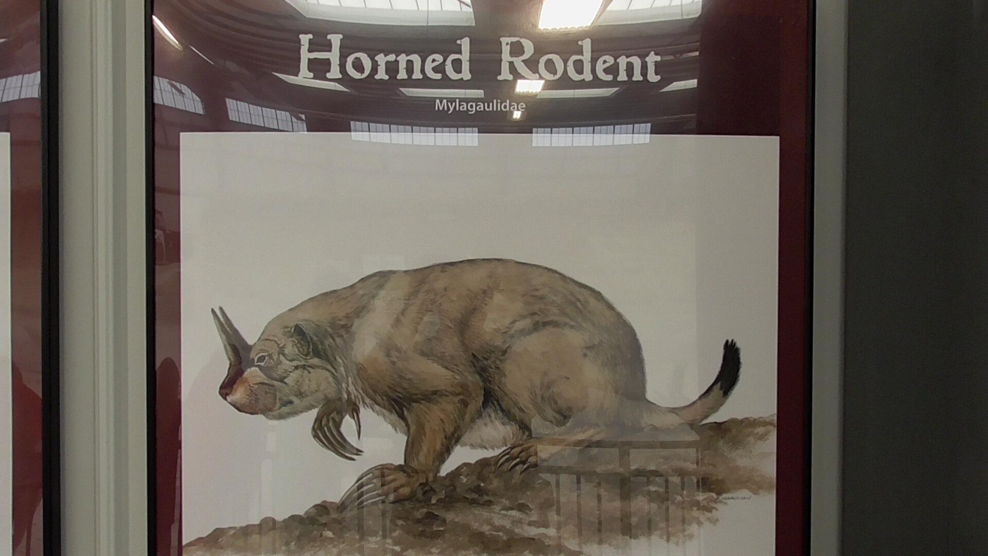 Horned Rodent