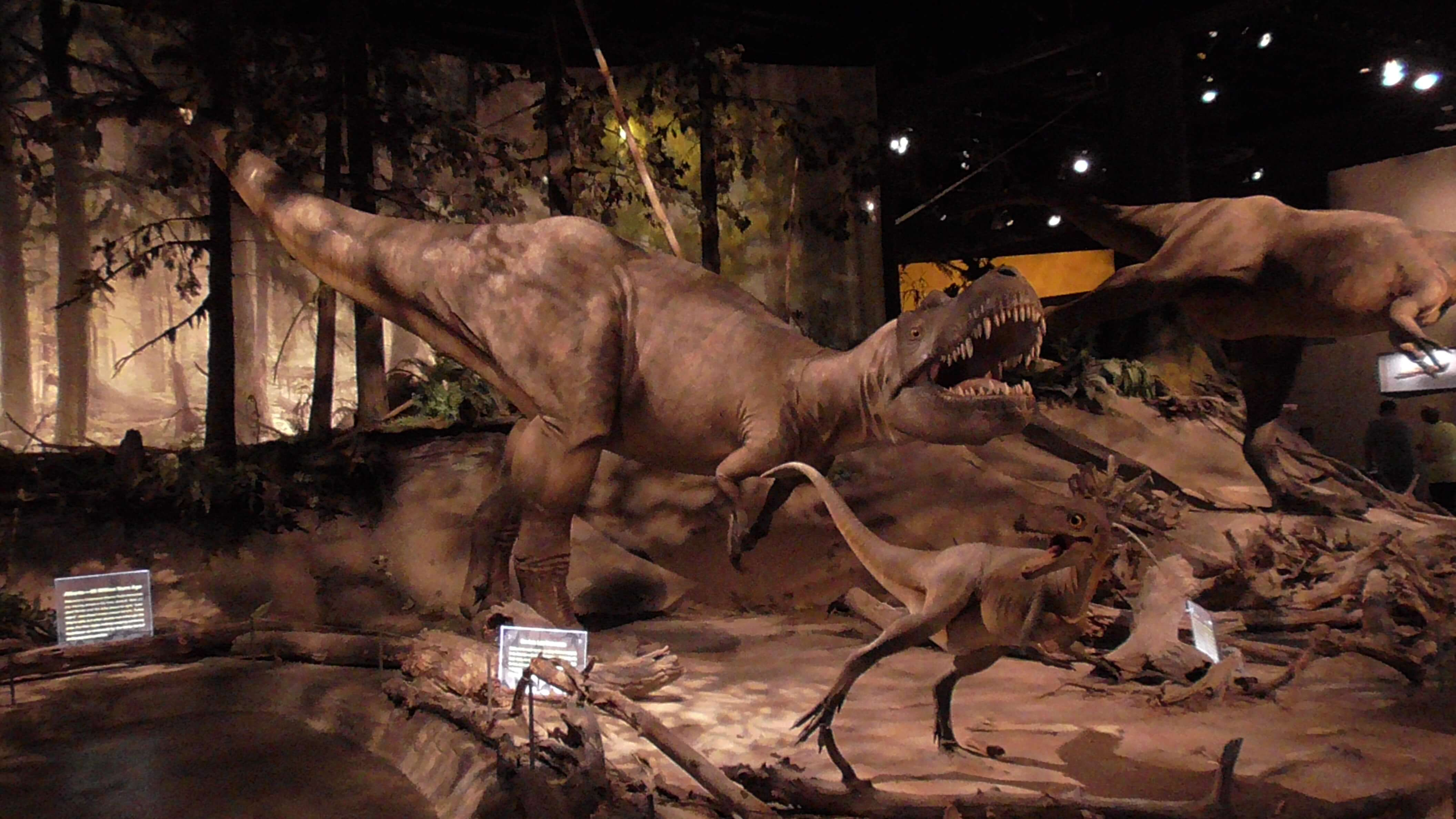 Allosarus adult and juvenile, Royal Tyrrell Museum
