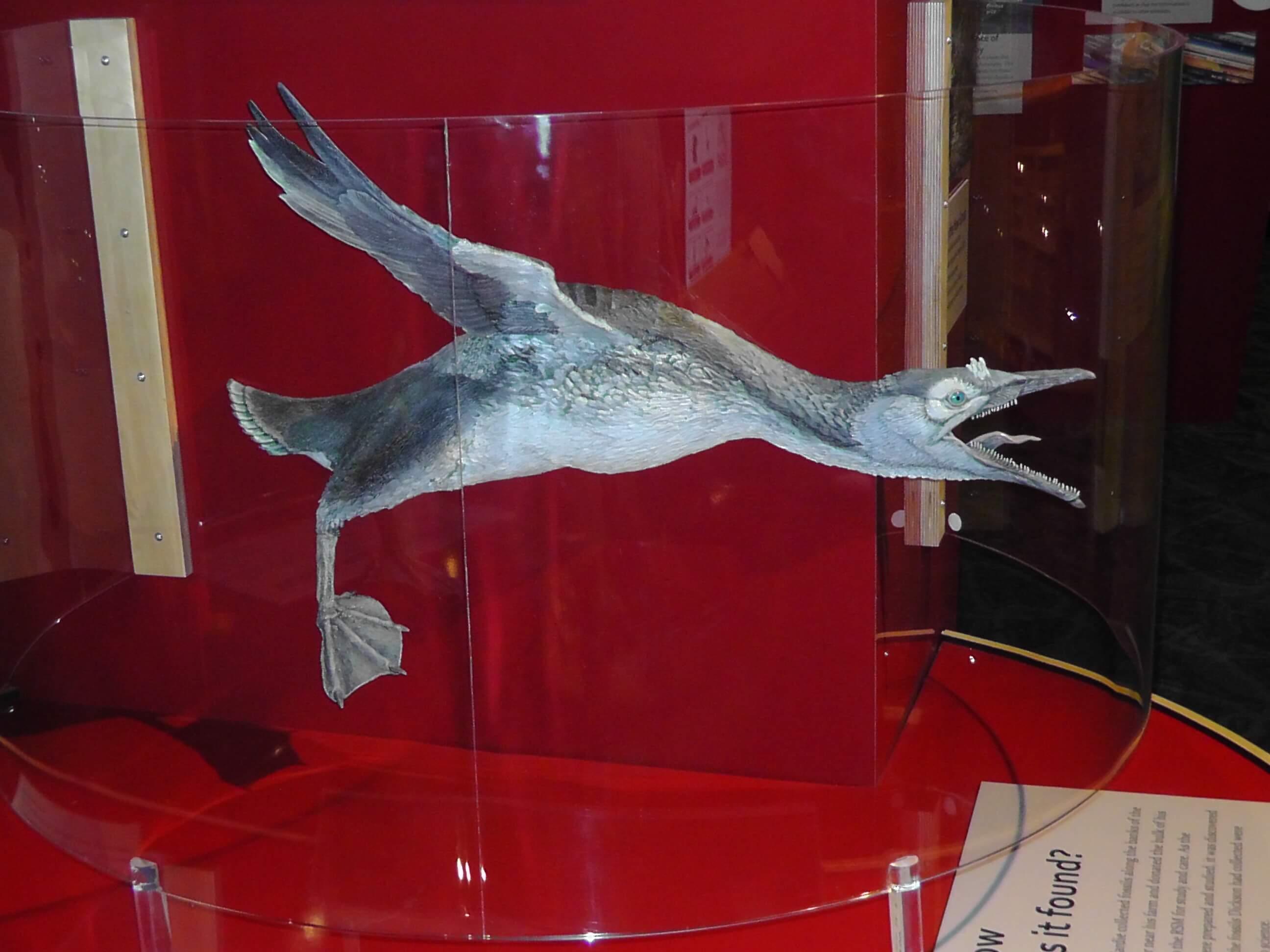 Cretaceous Bird (note teeth), Royal Saskatchewan Museum, Regina, Saskatchewan