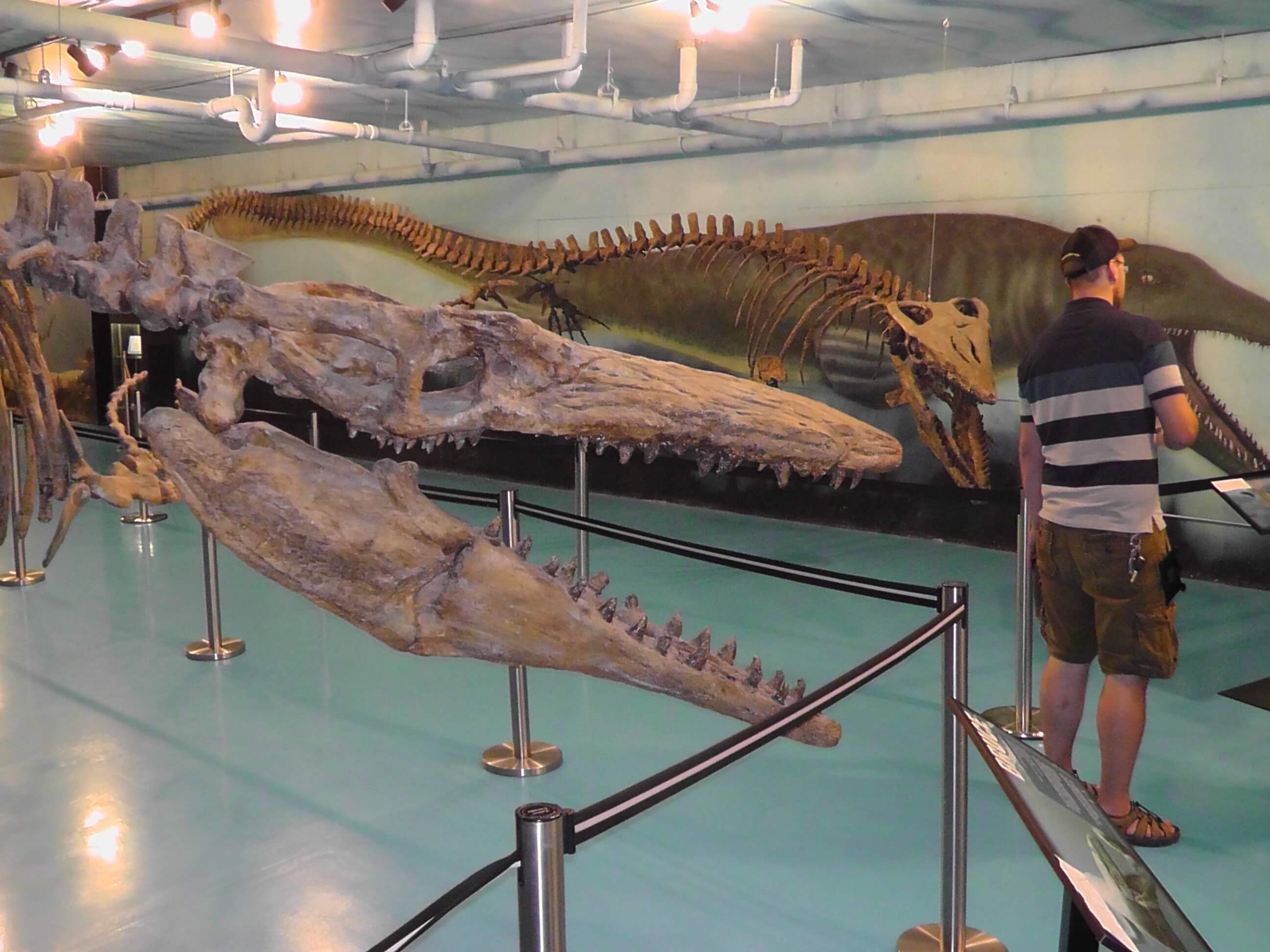 Bruce (43 foot Mososaur), Canadian Fossil Discovery Center, Morden, Manitoba