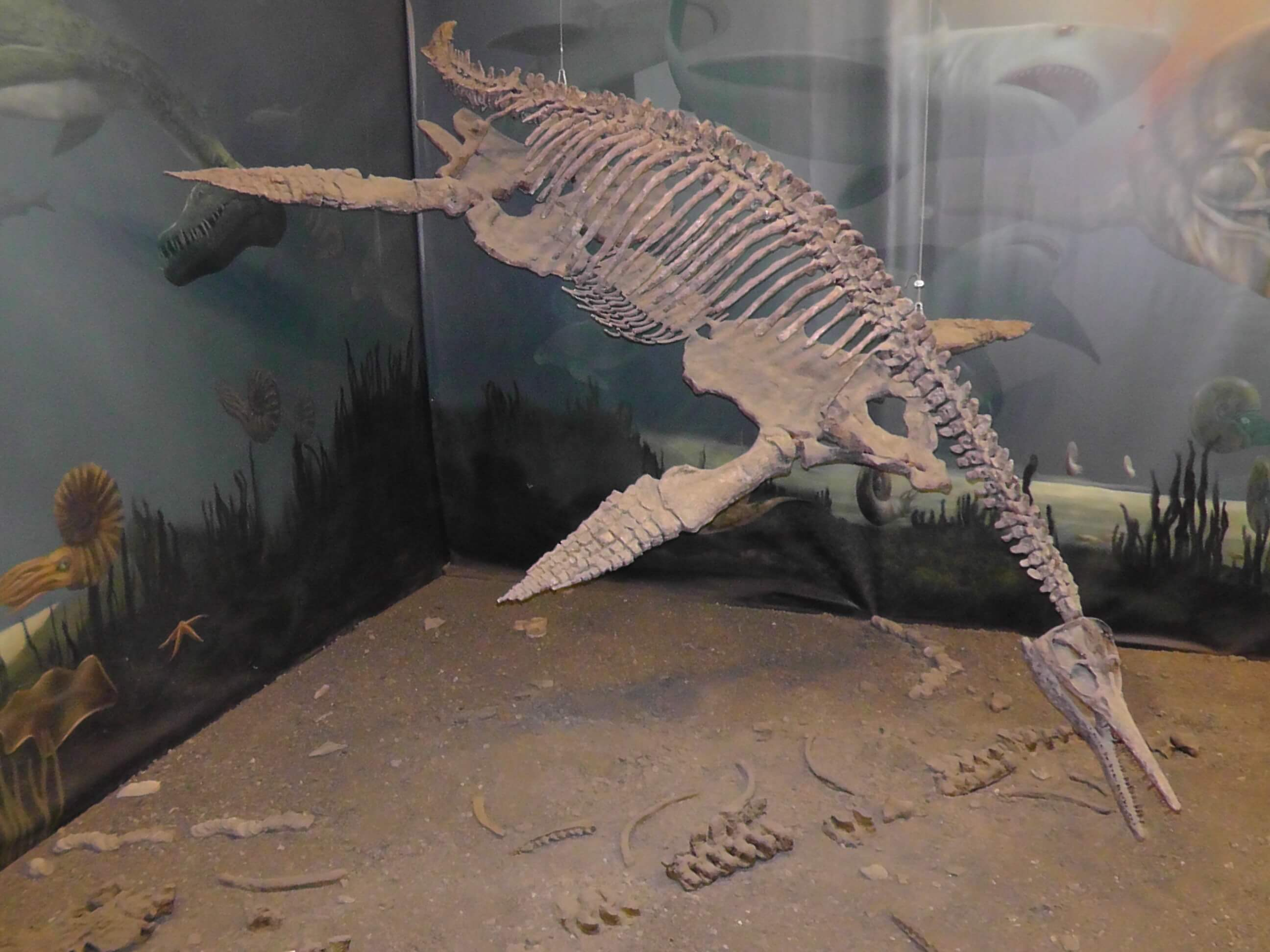 Short necked Plesiosaur, Canadian Fossil Discovery Center, Morden, Manitoba