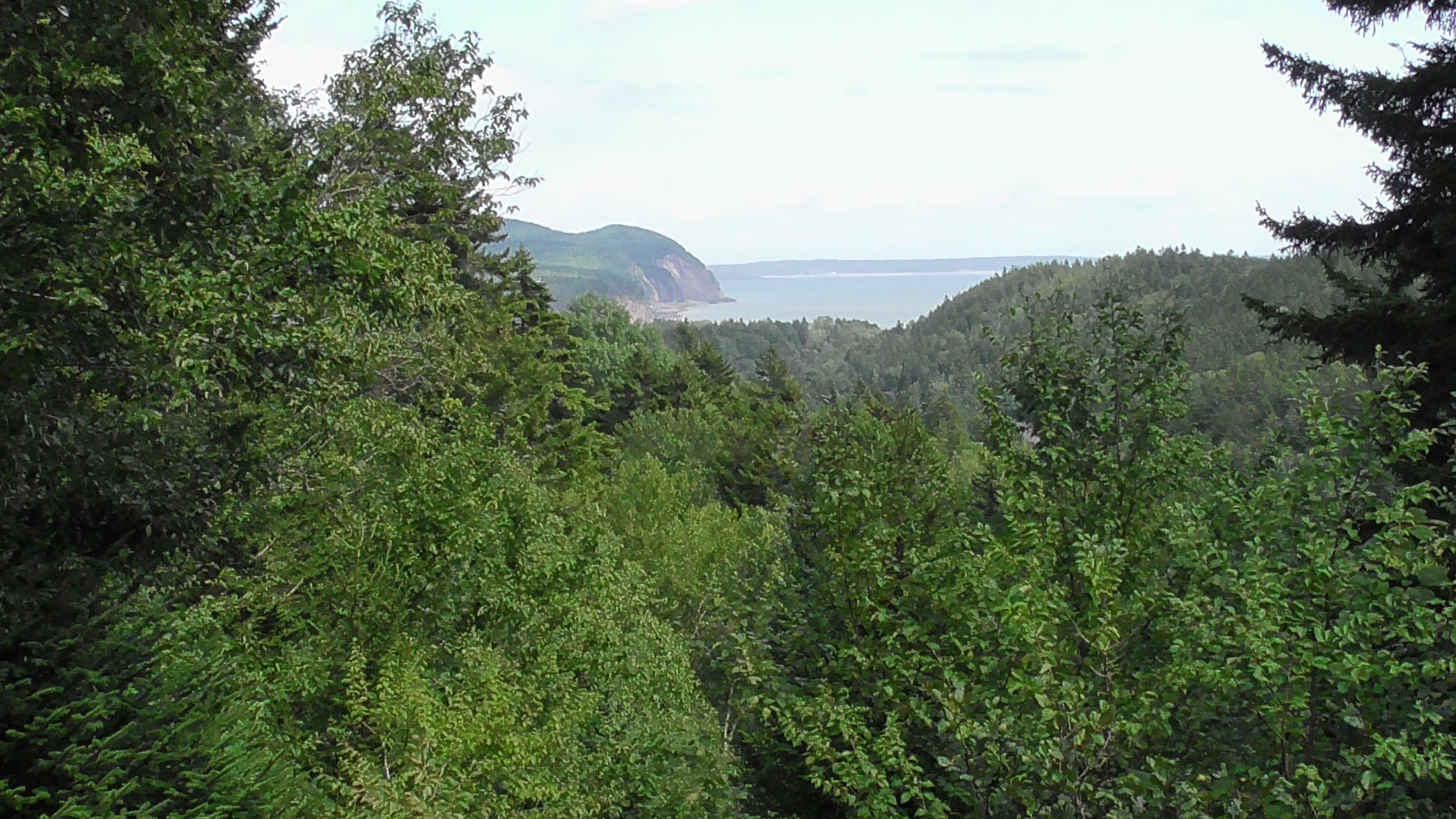 Where the forest meets the sea, Fundy National Park, New Brunswick