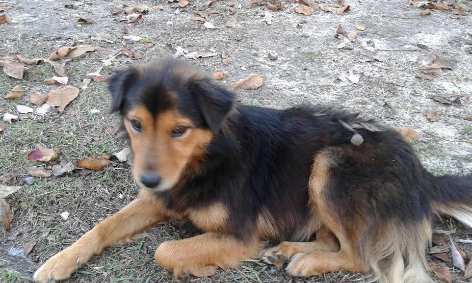 lost dog near hickory grove