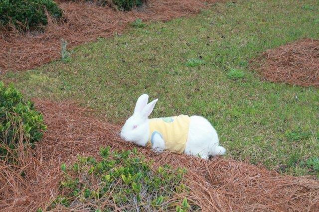 Bunny Fun Run for Bladen County Relay for Life 19