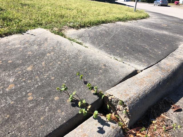 Cemetery Damage 1 4:3:2019