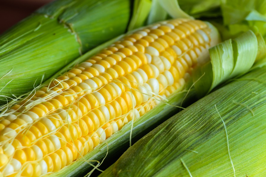 Sweet Corn is a Treat!  {How to choose and store sweet corn}