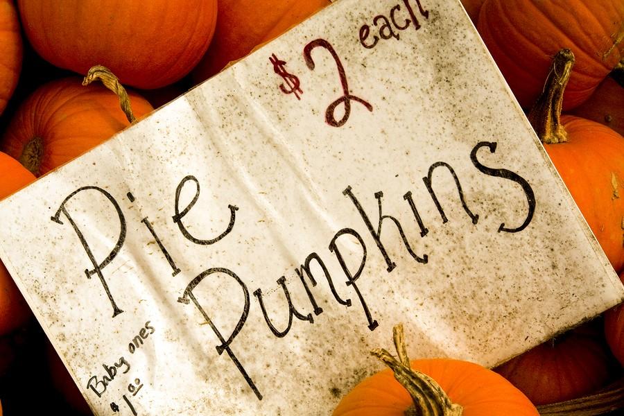 Pumpkin 101: How to Cook a Fresh Pumpkin for Pumpkin Recipes