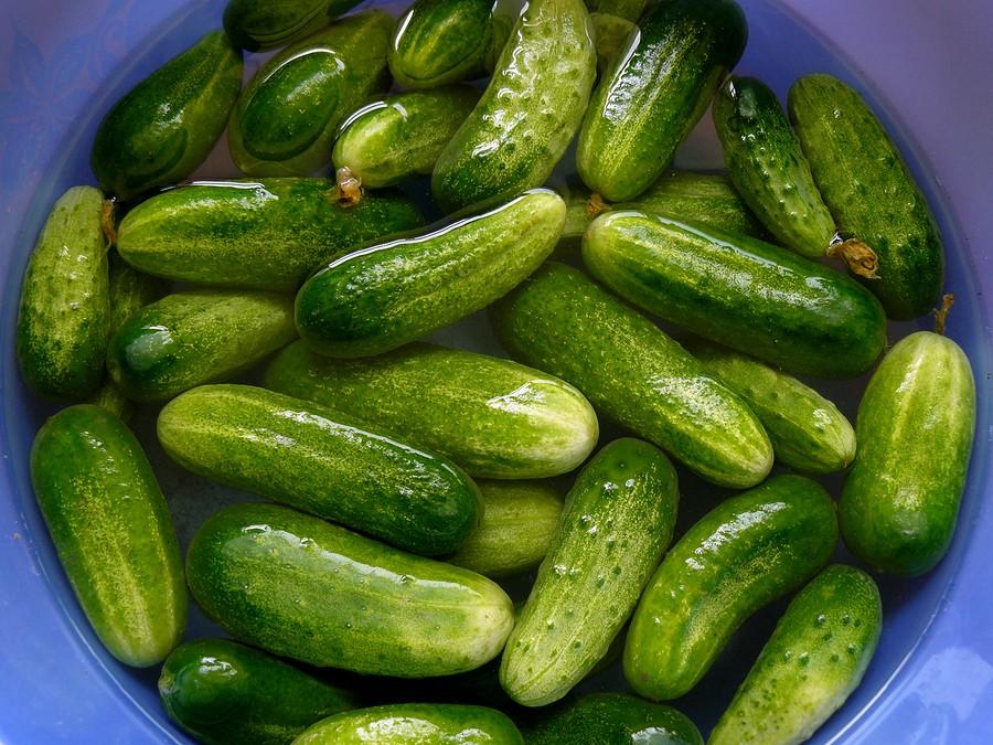 Cool as a Cucumber: Freezer Pickles Recipe  {storing cucumbers   growing cucumbers   refrigerator pickles}