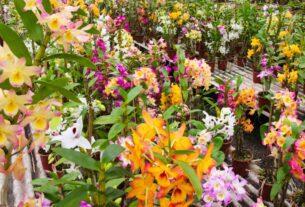 Exposição Nacional de Orquídeas