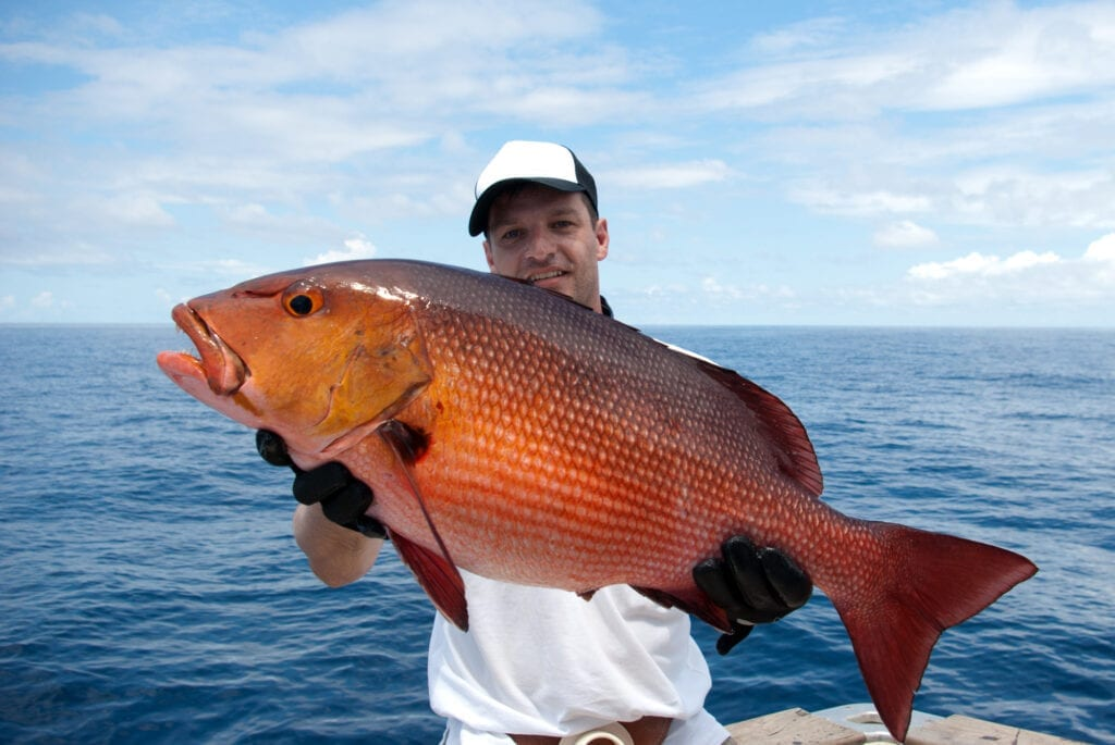 alabama fish red snapper