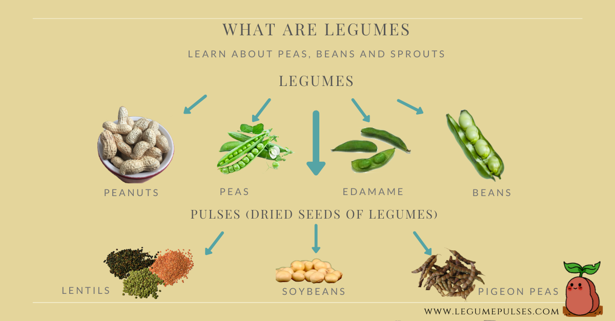 What are legumes? Examples of legumes and pulses.