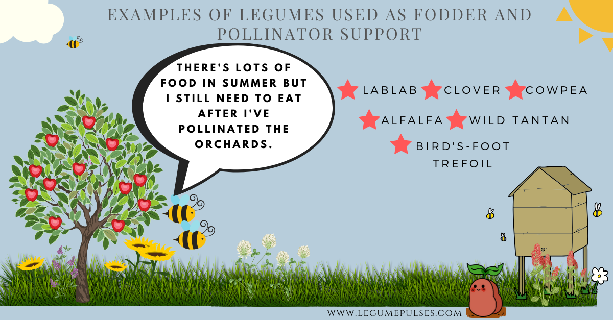 Examples of legumes used in agriculture