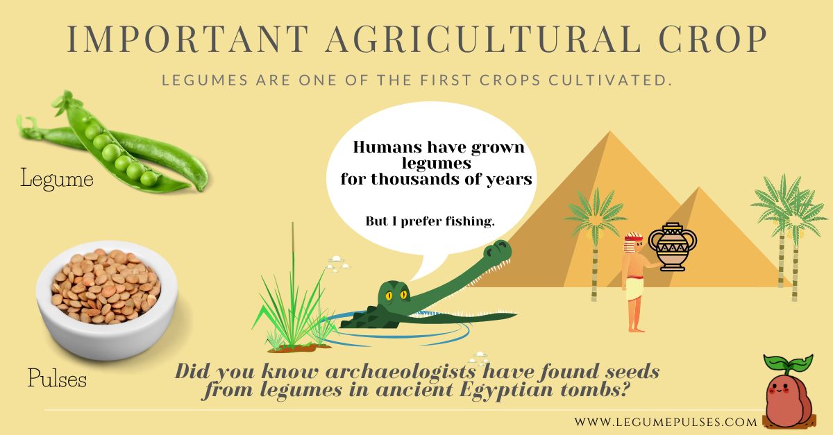 Legumes in ancient agricuture