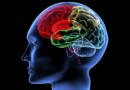 Mejore su intelecto y sus hábitos durante la cuarentena