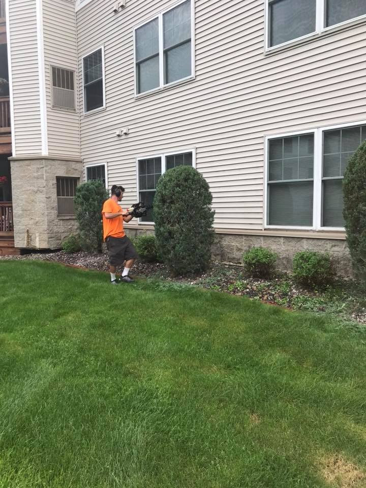 trimming a shrub in minnesota