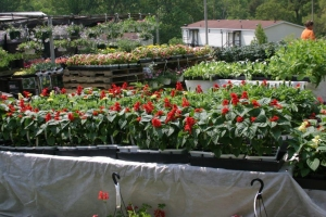 Plants aligned for sale