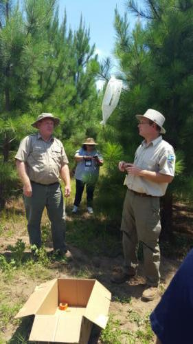 TCW 2017Georgia Forestry CommissionFlint River Nursery