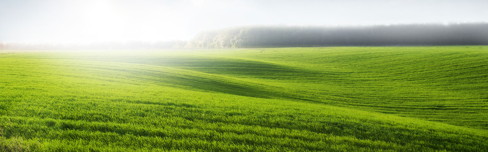 pastures-header