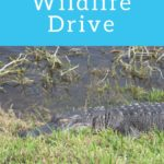 Lake Apopka Wildlife Drive Florida
