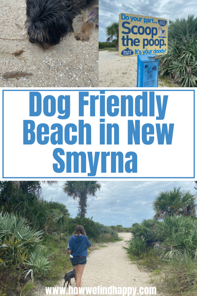 Dog Friendly Beach in New Smyrna