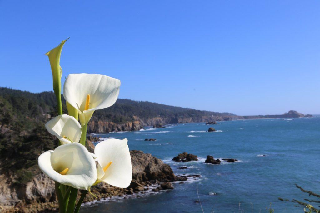 landscape-cala-lilly