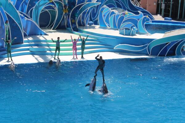 San Diego Sea World dolphins