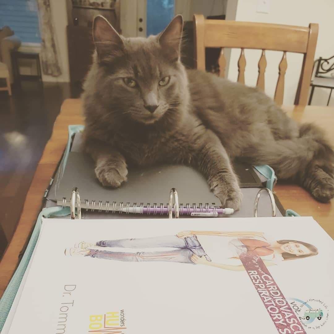 homeschool teacher who is a gray cat