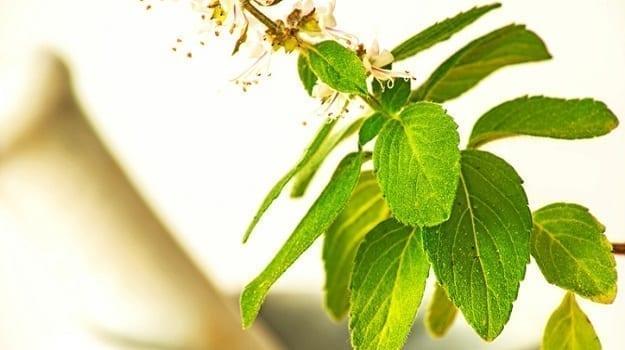 Adaptogen Herbs