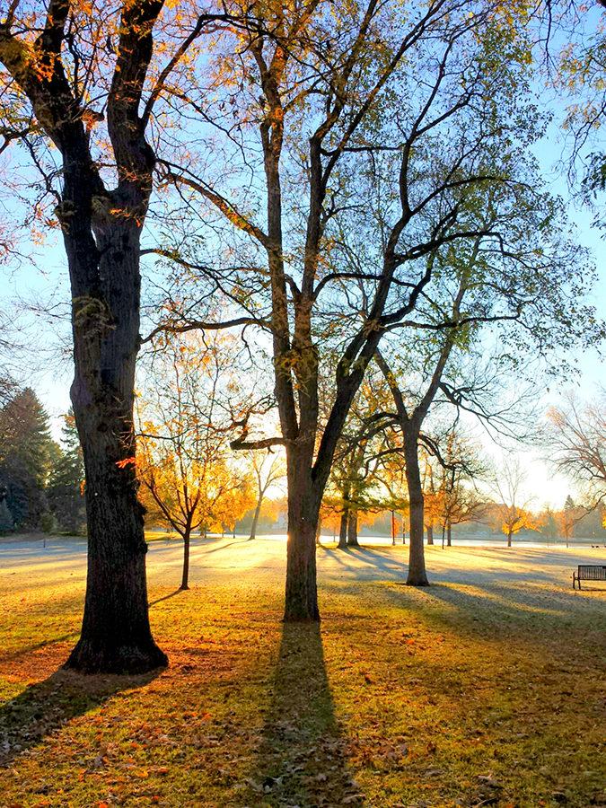 Autumn's Golden Light - Jimbro Wohletz