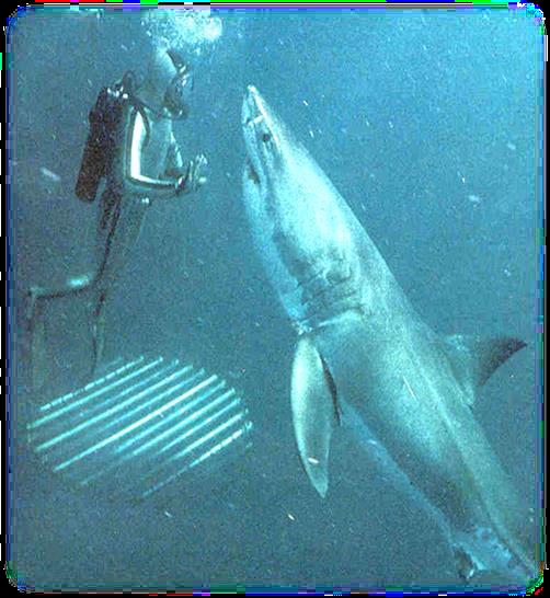 shark and me