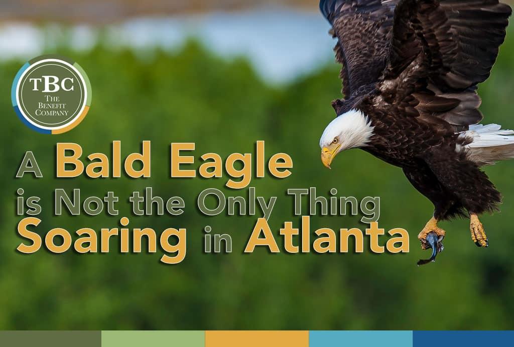 bald eagle atlanta
