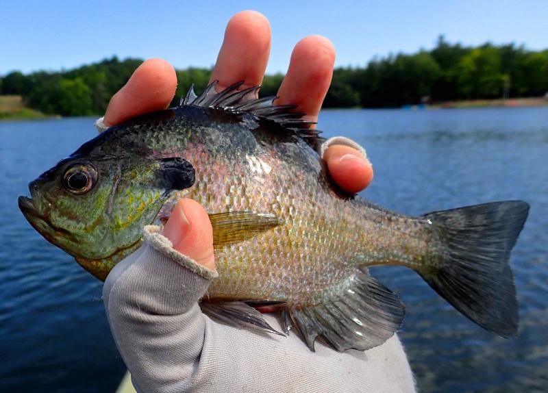 Sunfish ...