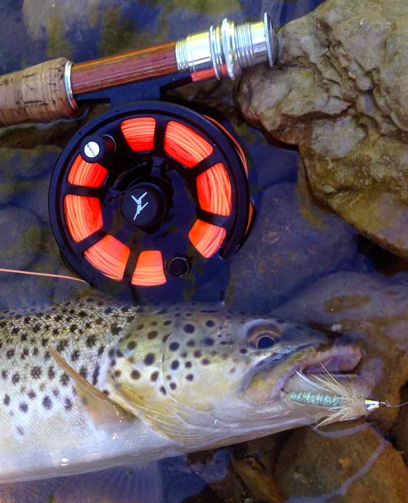 Echo Ion Fly Reel Grand River Brown Trout Resized for Web