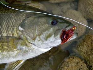 Grand-River-Streamer-Smallmouth-Bass-300x225