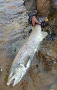 spirit-river-mesh-tailing-gloves-mike-atlantice-salmon-sault-saint-marie-ontario-rapala-centerpin-float-reel-dew-worm-bbb