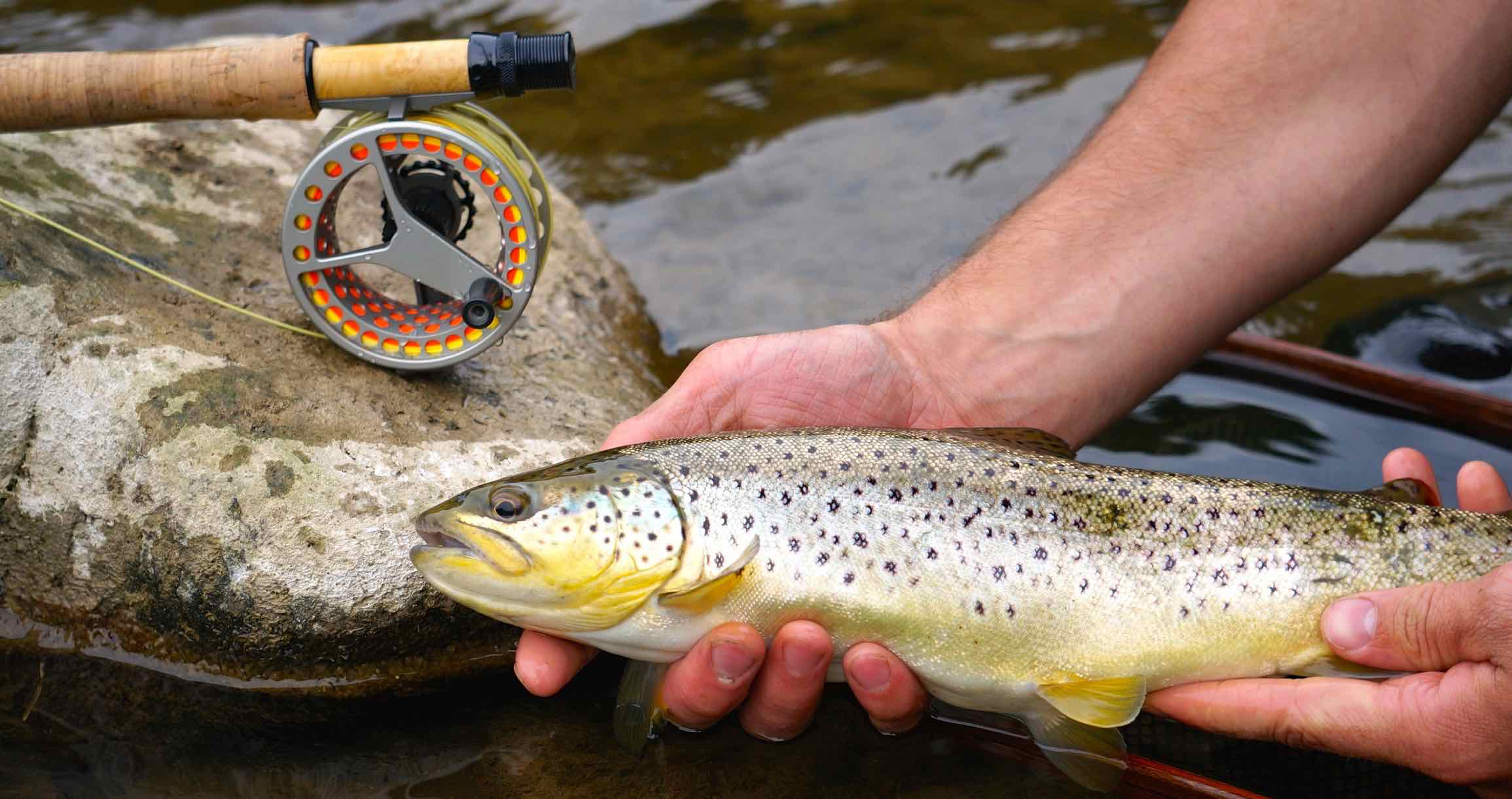 Waterworks Lamson Force Grand River Second Year Brown Trout AA