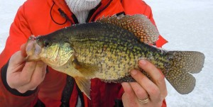 Belwood Lake Crappie Resized for Web