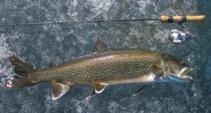 Lake Trout Ice Fishing AAA
